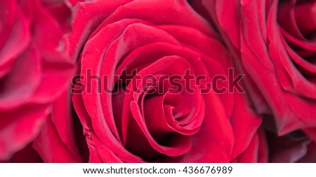 Red roses close up background. Love, romance, valentines day, passion and wedding red roses background idea. Bouquet of red roses flowers closeup photography. Red roses petals and buds macro close up - stock photo