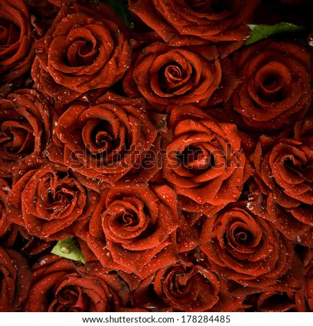 red roses covered in dew - stock photo