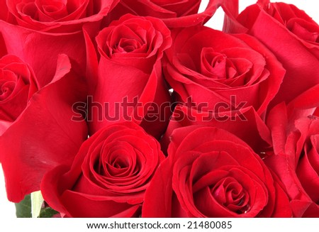 red roses in a bunch on a white background