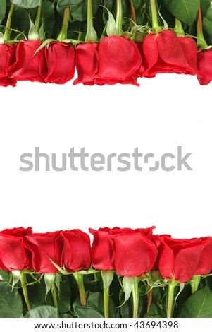 Red Roses in a Row With Vertical Placement Isolated on White With Copy Space - stock photo