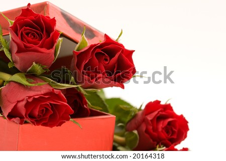 red roses in gift box, on white background
