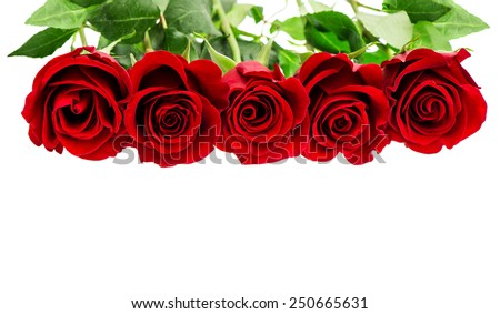 Red roses isolated on white background. Flowers border. Gift card concept - stock photo