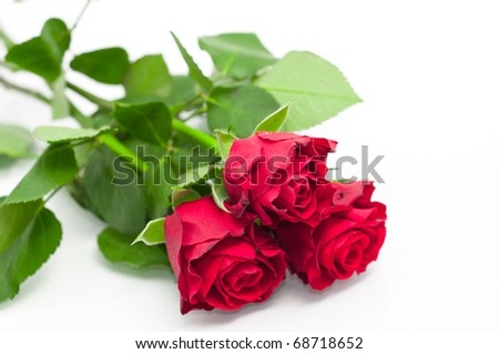 red roses on a white background with space for text - stock photo