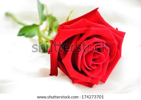 Red roses on fabric  - stock photo