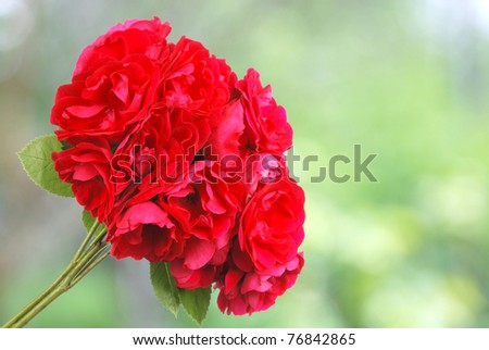 red roses on green bacground