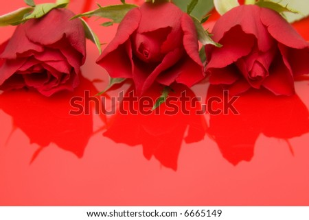 red roses on red reflecting background
