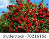 red roses on sunny sky background - stock photo