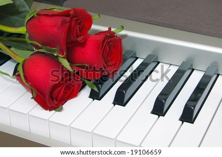 Red roses on the keyboard of the piano