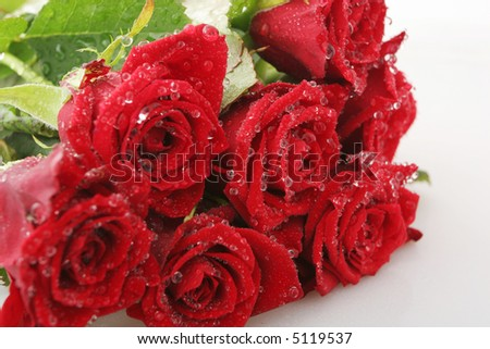 Red roses on white with dew drops