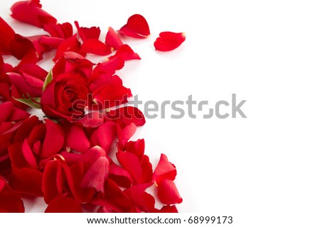 Red roses petals background