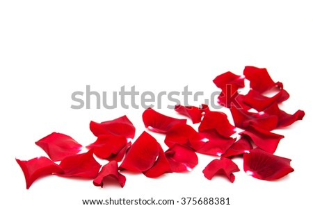 Red roses petals isolated on a white background - stock photo