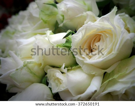 Red roses shaped in the form of heart. Many white roses as a floral background. Rose Flowers Over White. Valentine. Love