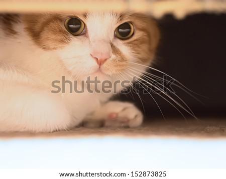Red sad cat looking - stock photo