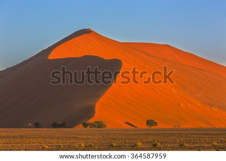 Red Sand Dune and camelthorn trees - stock photo