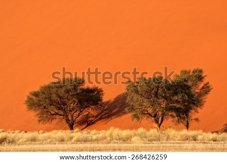 Red sand dune with African Acacia trees and desert grasses, Sossusvlei, Namibia, southern Africa - stock photo