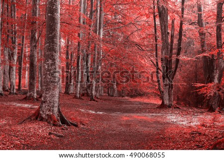 Red scary forest trail
