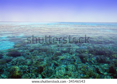 Red Sea, Aqaba gulf, Egypt. Coral reef.