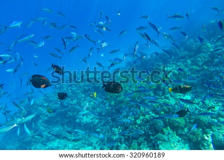 red sea coral reef with hard corals, fishes and sunny sky shining through clean water - underwater photo - stock photo