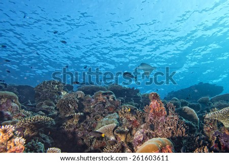 Red Sea corals house for Fishes close up portrait - stock photo