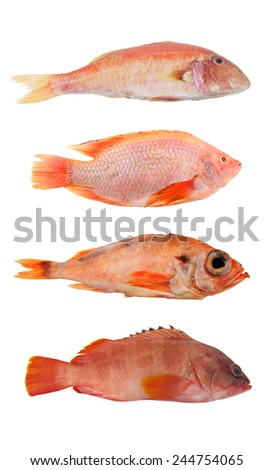 Red sea fish collection isolated on white  - stock photo