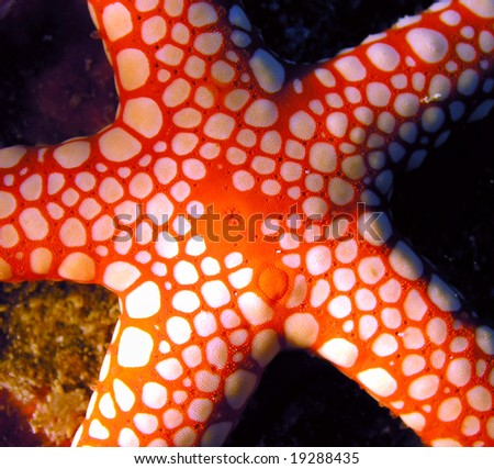 Red Sea star fish - stock photo
