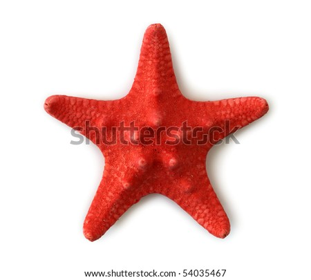 Red sea star isolated on white background - stock photo