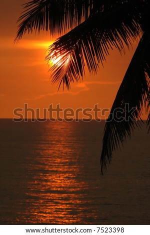red sea sunset through palm leaf - stock photo