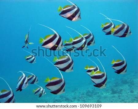 red sea with exotic fishes - stock photo