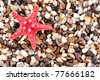 Red seastar on pebble background - stock photo