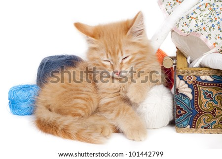 red sleepy kitten with color threads - stock photo