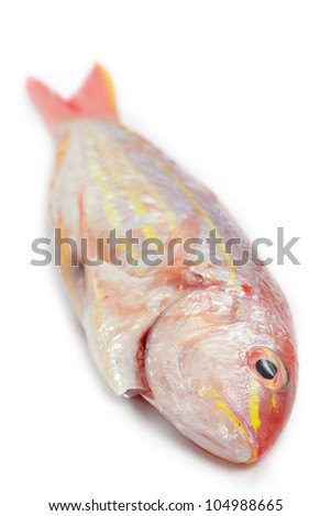 Red snapper fish isolated on white background - stock photo