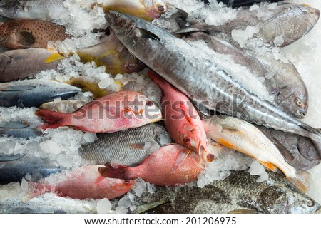 Red snappers and sea bream and other fish for sale at fish market.