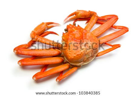 red snow crab - stock photo