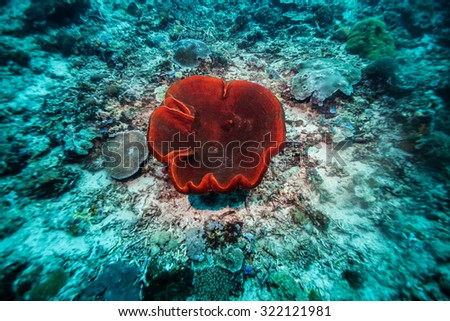 red soft coral - stock photo