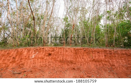 Red soil and small plant before excavation - stock photo