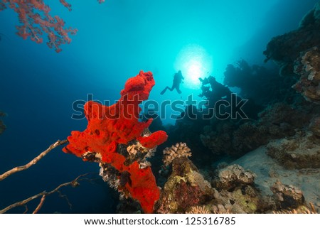 Red sponge and diver silhouette - stock photo