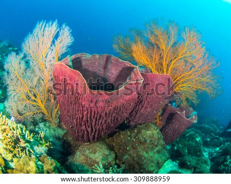 Red sponge with sea fans  - stock photo