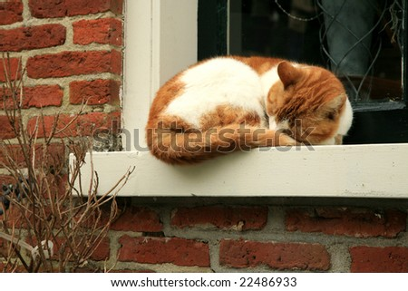 Red, spotted cat sleeping on the windowsill. Domestic animal.