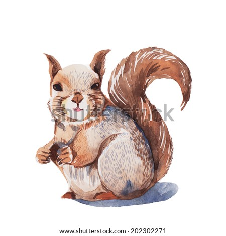 Red Squirrel eating walnut , watercolor painting - stock photo