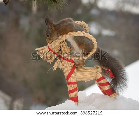 red squirrel in snow with a animal of straw - stock photo