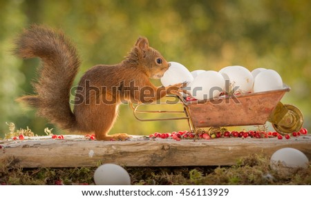red squirrel standing with a wheelbarrow and egg in hands - stock photo