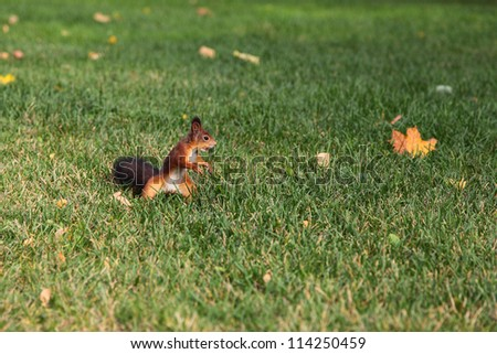 Red squirrel with a nut on the green grass