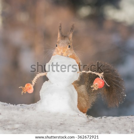 red squirrels behind a snowman  - stock photo