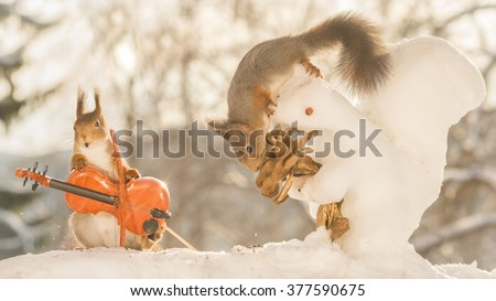 red squirrels in snow with ice squirrel flower and violin  - stock photo