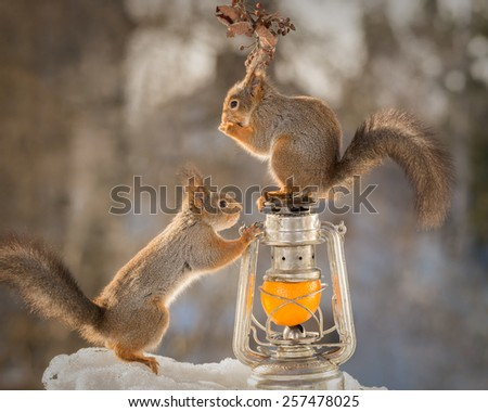 red squirrels standing on and around storm lamp with a orange surrounded with branches with  berries and snow - stock photo
