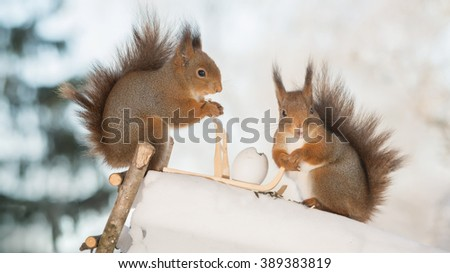 red squirrels with sledge and eggs on ice  - stock photo