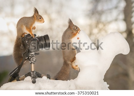red squirrels with snow squirrel and camera - stock photo