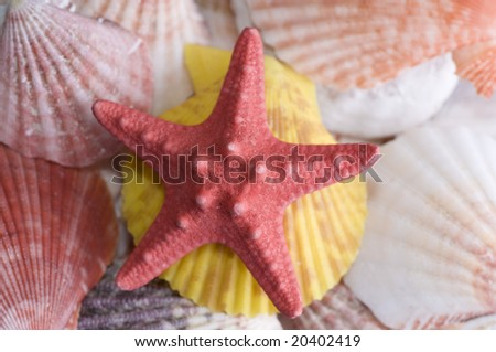Red starfish and colored seashell - stock photo
