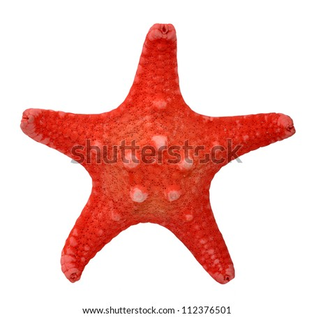 Red starfish isolated on white background - stock photo