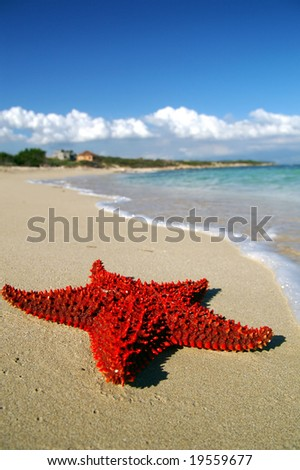 red starfish on a beach - stock photo